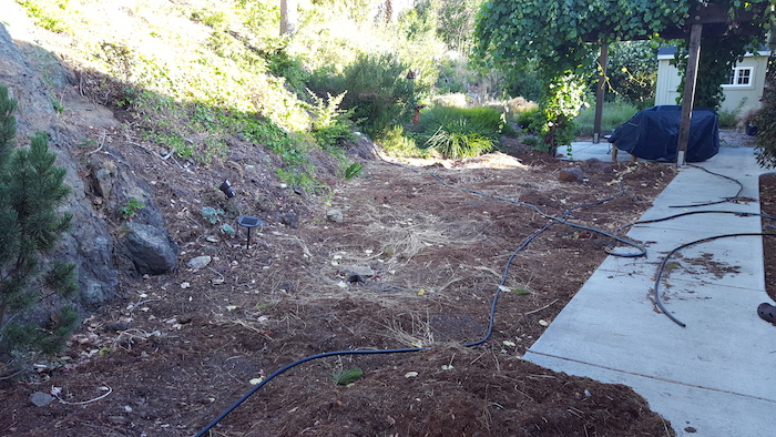 Area after tearing out plants