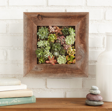 succulent-living-wall-planter-kit