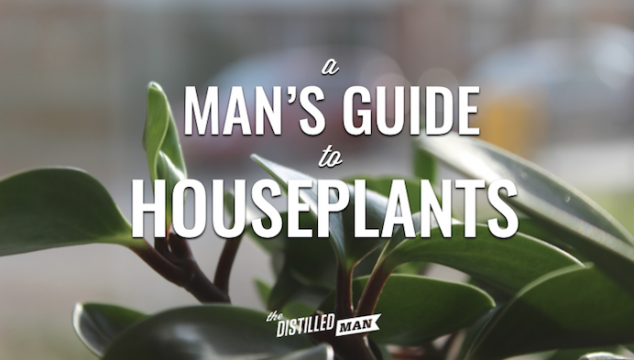 A Man's Guide to Houseplants